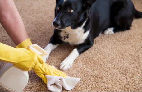 cleaning a pet stain in little rock ar